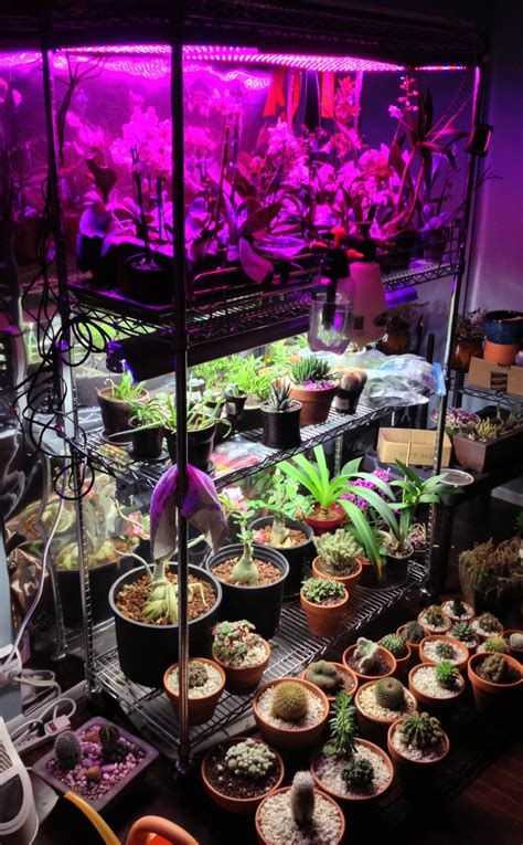 led grow lights for orchids growing succulents indoors lighting lighting ideas
