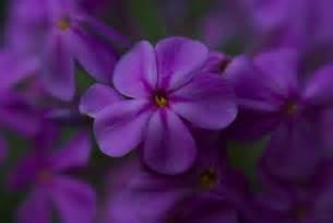 House Plants Pink Flowers - flowers seeing
