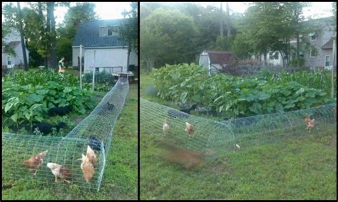 chicken diy 20 to make projects for happy and healthy chickens books let the chooks help with gardening by a moveable