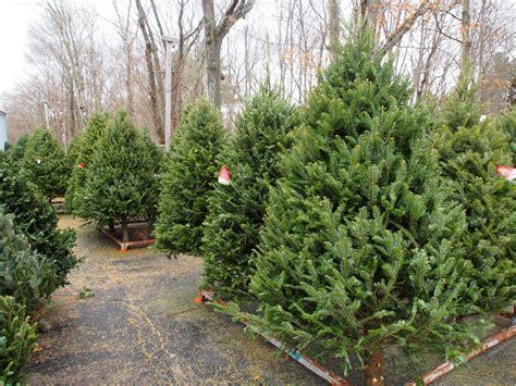 christmas trees ferestien feed farm supply