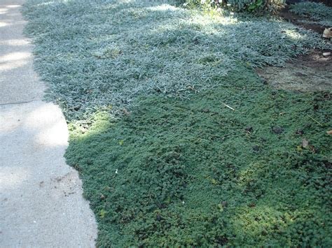 amazing Drought Tolerant Landscaping Ideas #3: Ground-Cover-And-Grasses-16.jpg