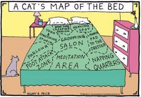 Futon Jokes by Comic A Cat S Map Of The Bed Designtaxi