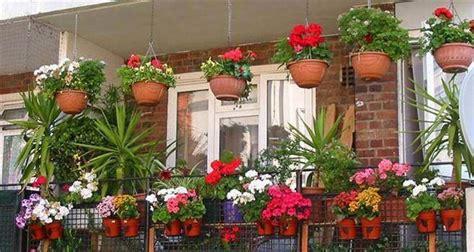 wallpaper bunga gantung 5 jenis bunga cantik untuk ditanam di pot gantung stella