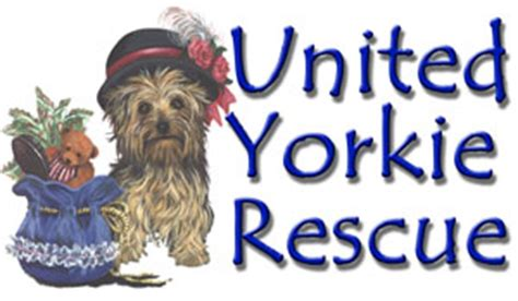 united yorkie rescue hale pet door terrier rescue organizations