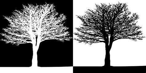 imagenes blanco y negro para cuadros dibujos de arboles en blanco y negro imagui