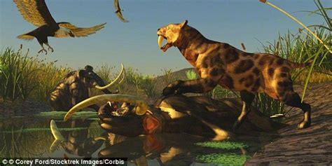 sabre toothed tigers   stopped mammoths destroying