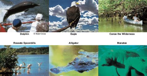 everglades national park boat tours mangrove wilderness everglades boat rentals and everglades boat tours of