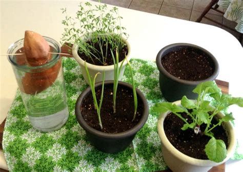 Vegetables And Herbs You Can Regrow Just By Using Kitchen Vegetable Scraps In Garden