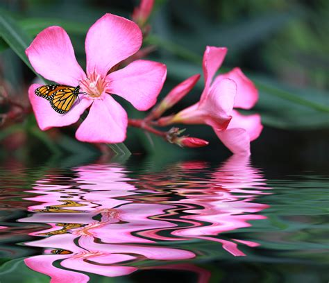 Sedona Platform Pink pink flower reflected in water spiritquest retreats