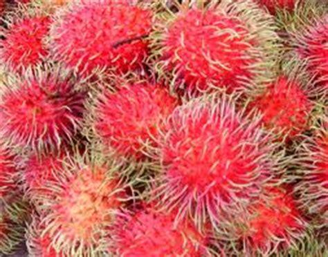 Blender Hokki Top manfaat jus buah rambutan indohokki