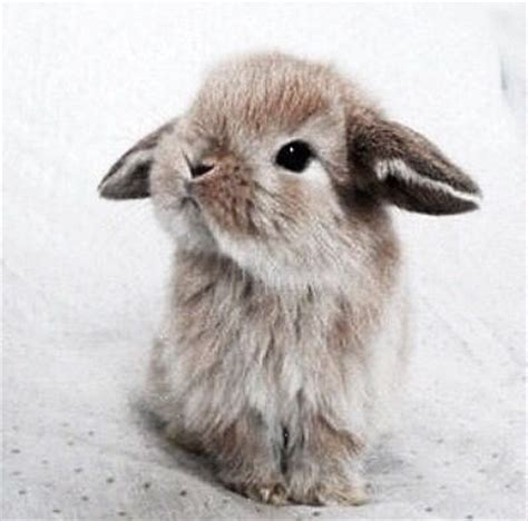 cute rabbit themes pictures of the cutest bunnies in the world impremedia net