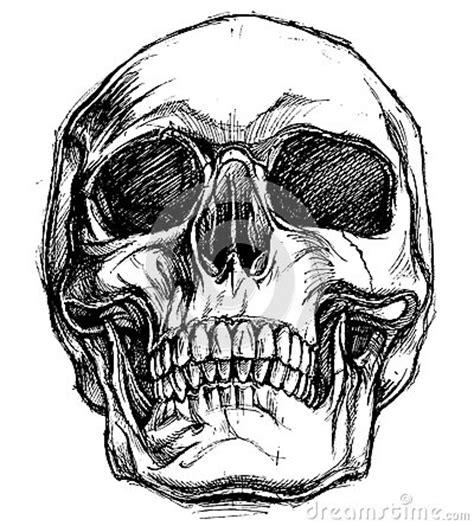 doodskop tekenen skull drawing line work vector stock vector image 64923384