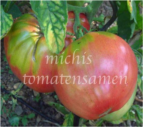 Tomatensamen Aus Tomaten 2898 by Tomatensamen Aus Tomaten Gem Sesamen S Mereien Zwiebeln