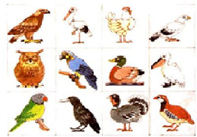 imagenes animales que vuelan 5 animales que vuelan imagui
