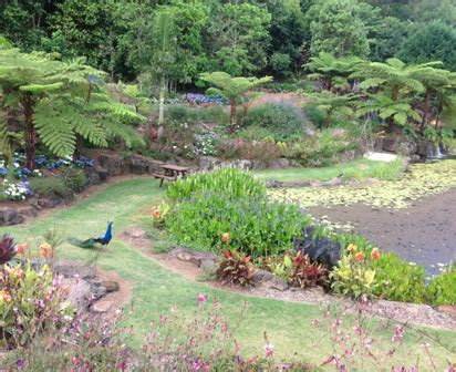 Maleny Botanic Gardens Maleny Botanic Gardens What S Up Downunder