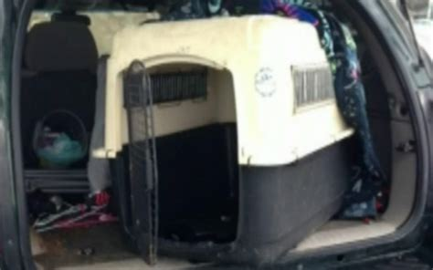 barking in crate pit bull living in his own filth is rescued from trunk of repossessed vehicle barkpost