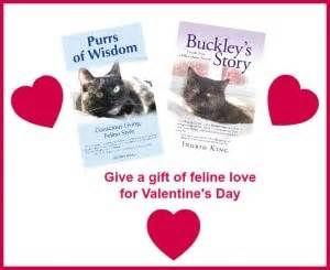 is for cat a gift book books s gifts for cats and cat