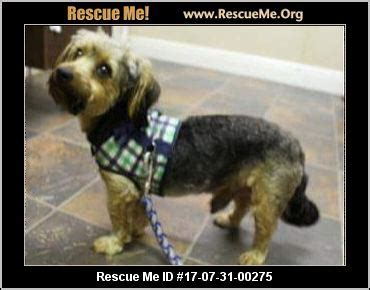 yorkie rescue mississippi mississippi yorkie rescue adoptions rescueme org