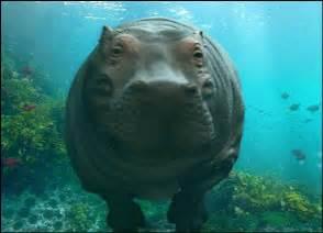 the coveted common hippopotamus zoo peeps