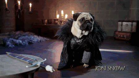 pug of thrones pug news and photos perez