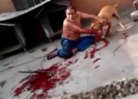 imagenes de hombres en boxer con pollas xxl policias de ny disparan quot 2 disparos quot a un perro 191 en