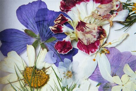 seccare fiori seccare fiori fiori secchi come essiccare i fiori