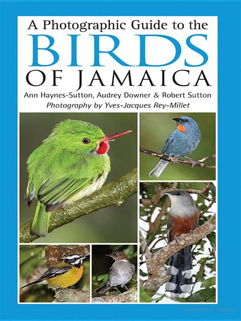 Photographic Guide To The Birds Of Javan Montane Forest Gn Halimun Par jamaica birding