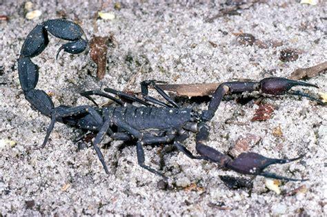 species of arachnida and myriopoda scorpions spiders mites ticks and centipedes injurious to classic reprint books arachnida arachnids spiders scorpions mites