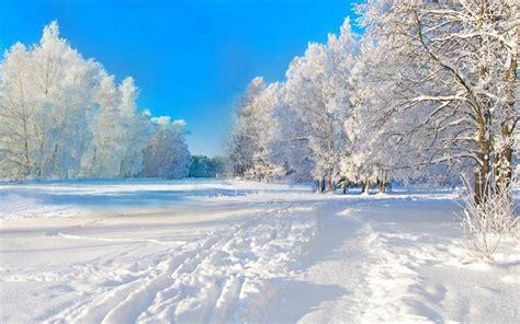 imagenes e 4k fondos 4k de arboles nevados lanaturaleza es