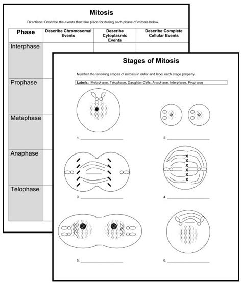 Mitosis Worksheet Middle School by New Downloads 2 Cell Organelle Quizzes 2 Mitosis