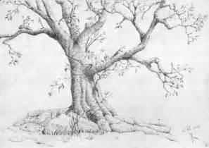 drawings of trees 20 tree drawings jpg
