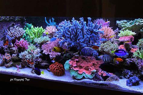 Hiasan Akuarium Coral Anemon S ilumina 231 227 o duvida em qual tipo escolher foco em sps