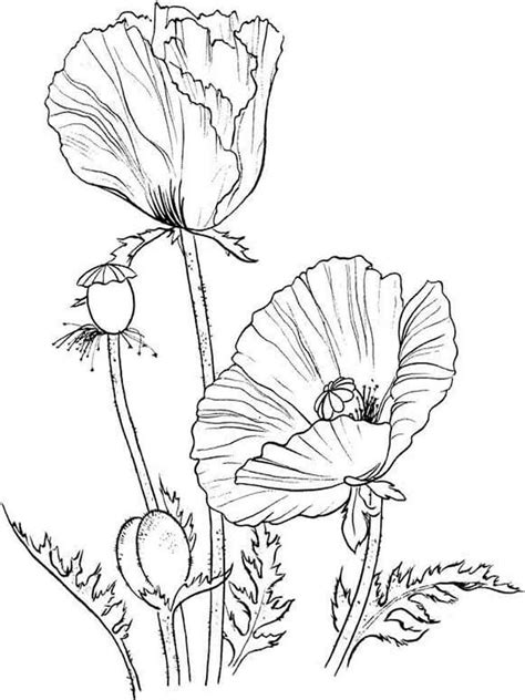 coloring page of a poppy flower poppy flower coloring pages download and print poppy