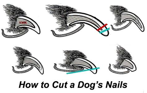 how to cut puppies nails how to trim your s nails page 2 of 3 loving dogs daily