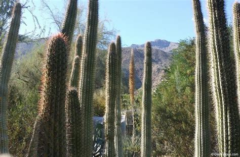palm springs botanical gardens moorten botanical gardens palm springs day trip