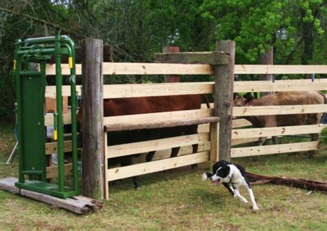 Set Catte how do you set up a cattle chute with the