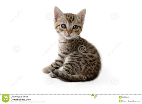 Design Plan by Striped Kitten Lying Down Stock Images Image 2735594