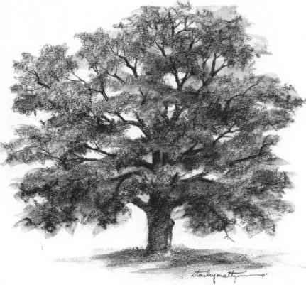 of tree best 25 tree drawings ideas on trees drawing