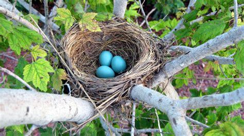 birds nest in tree gm and wildlife can coexist necommonground