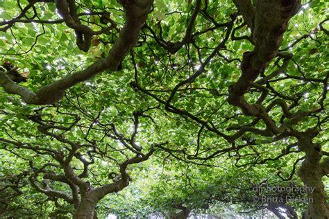 botanischen garten ein sonntagsspaziergang im botanischen garten in krefeld