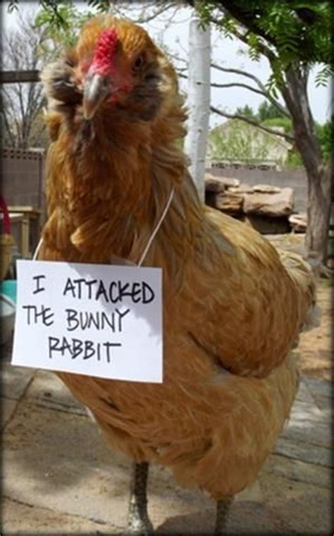 backyard poultry magazine poultry shaming contest vote