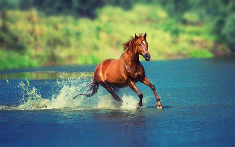 horse running in water