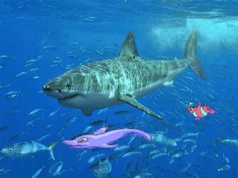imagenes animales ovoviviparos ciencias naturales peces cartilaginosos