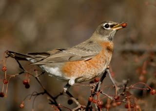 food sources for wildlife welcome wildlife com