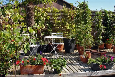 pflanzen für balkon bepflanzung balkon idee
