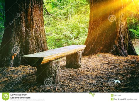 bench in forest wood bench in the summer forest stock photo image 39773369
