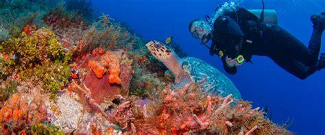 blue dive blue xt sea diving cozumel scuba diving blue xt sea diving
