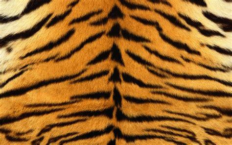 Baju Print Animal Tiger textura piel de tigre wallpapers