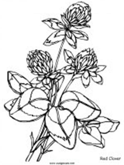 coloring pages of australian flowers disegni da stare e da colorare natura il fiore i fiori