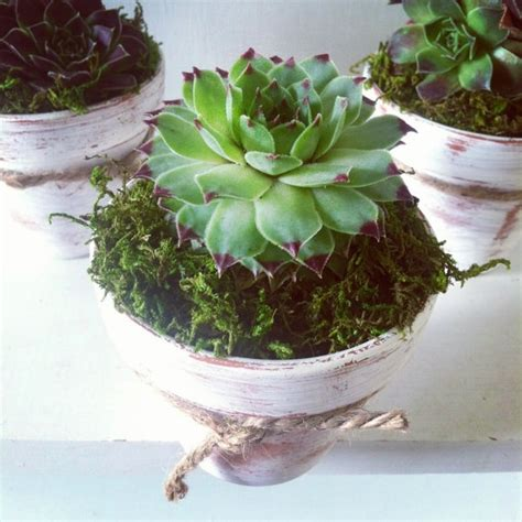 Hen And Planter by Hens Planter